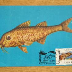 MXM - PESTI - BARBUNUL - PRO NATURA - CLUJ NAPOCA 1992, Romania de la 1950, An: 1995, Fauna