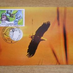 MXM - FAUNA - CODALBUL - MUZEUL DE STIINTELE NATURII GALATI - BUZAU 1995, Romania de la 1950