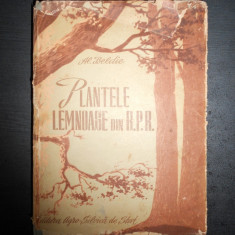 AL. BELDIE - PLANTELE LEMNOASE DIN R.P.R. * MANUAL DE DETERMINARE {1953}