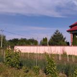 Vand teren Cernica, sat Posta, 1800 mp - Teren de vanzare, Teren intravilan