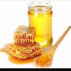 Miere de albine - Apicultura