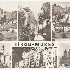 Targu Mures 1965 - mozaic