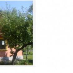 Vand casa Titu/Dambovita (Costesti Deal), Tudorache Ion, 0722266033, 35000 euro - Casa de vanzare, 200 mp, Numar camere: 4, Suprafata teren: 3000