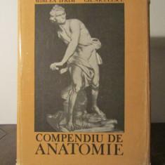 Compendiu De Anatomie - Mircea Ifrim Gheorghe Niculescu