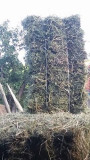 Baloti de lucernă si iarba grasă,an 2018