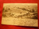 Ilustrata Turma de Oi in Scotia - Highlands circulat 1902la Bucuresti ,goarna