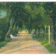 4042 - TURNU-SEVERIN, Park - old postcard - unused - Carte Postala Oltenia 1904-1918, Necirculata, Printata