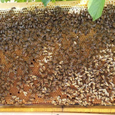 Matci selectionate si Familii de albine PNA@F.EU - Apicultura