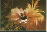 CPI (B9009) CARTE POSTALA - BUCURESTI. MUZEUL GRIGORE ANTIPA, PASAREA PARADIS, Circulata, Fotografie