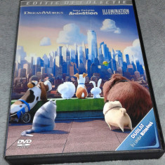 Colectie Desene Animate vol. 20 - 8 DVD dublate in limba engleza si romana - Film animatie dream works