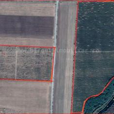 Vanzare livada plantata in 2008, suprafata 16.7 ha - Teren de vanzare, 167000 mp, Teren extravilan
