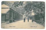 4100 - Brasov, ZIZIN - old postcard - unused, Necirculata, Printata