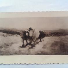 GRIGORESCU-NICOLAE GRIGORESCU-CAR CU BOI-CARTE POSTALA ANII 30