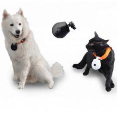 Zgarda cu camera pentru caini si pisici