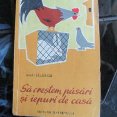 SA CRESTEM PASARI SI IEPURI DE CASA