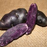 Cartofi Mov de Vanzare Agroam - Legume