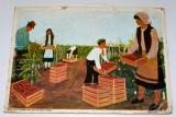 Plansa didactica din perioada comunista - RPR / RSR - pionieri in practica