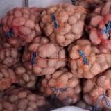 Cartofi rosii en-gros - Legume