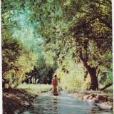 DELTA DUNARII, 1961 - Carte Postala Dobrogea dupa 1918, Circulata, Fotografie