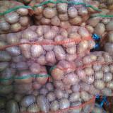 Vând CARTOFI consum CARRERA, BELLAROSA - Legume