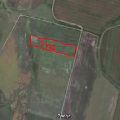 Teren arabil 1 Ha - Teren de vanzare, 10000 mp, Teren extravilan