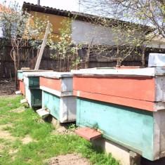 Vand stupi cu albine in jud. Dolj - Apicultura