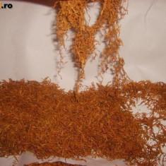 Tutun de fabrica firicel - Tutun Pentru tigari de foi
