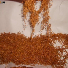 Tutun firicel - Tutun Pentru tigari de foi