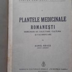Plante medicinale romanesti - AUREL RAUTA