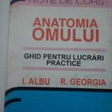 Anatomia omului - Ghid pentru lucrări practice