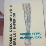 Anatomia descriptivă a membrului inferior