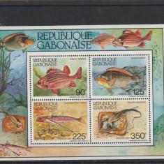 Fauna ,pesti ,Gabon., Nestampilat