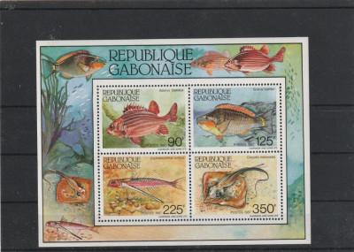 Fauna ,pesti ,Gabon. foto