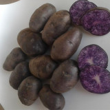 Cartofi mov consum/samanta - Legume
