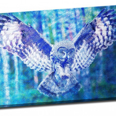 Tablou pe metal striat Blue Owl