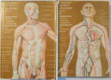 HUMAN ANATOMY , VOL I-II , by M.PRIVES, N. LYSENKOV , V. BUSHKOVICH 1985