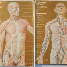 HUMAN ANATOMY, VOL I-II, by M.PRIVES, N. LYSENKOV, V. BUSHKOVICH 1985