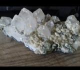 Flori de mina