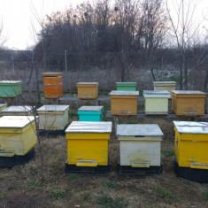 Vand 20 familii de albine - Apicultura