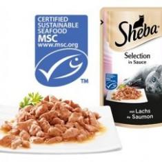 Sheba plic 85g Somon - Hrana pisici