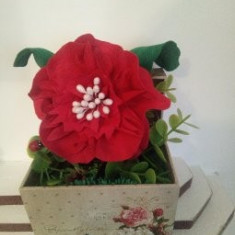 Floare rosie in cutie