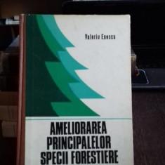 AMELIORAREA PRINCIPALELOR SPECII FORESTIERE - VALERIU ENESCU