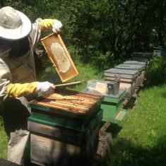 Familii de albine - Apicultura