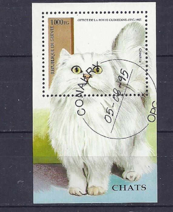 GUINEA 1995 ? PISICI DE COMPANIE, colita stampilata TR119