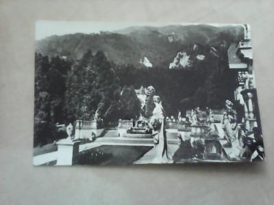 C.P - Sinaia , Terasa Muzeului Peles , necirculata foto