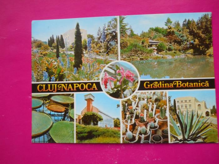HOPCT  37059  CLUJ NAPOCA /GRADINA BOTANICA IN 1980  - JUD CLUJ -CIRCULATA