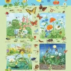 Plansa: Fauna si flora din campie - Carte educativa