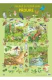 Plansa: Fauna si flora din padure