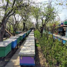 40 familii de albine - Apicultura