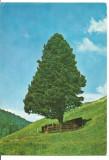 (A) carte postala(marca fixa)-BISTRITA NASAUD-Pasul Tihuta, Circulata, Printata